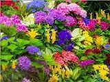 Posterlounge Cuadro de PVC 70 x 50 cm: Colorful Planting of Flowers de Sylvia Gulin/Danita Delimont