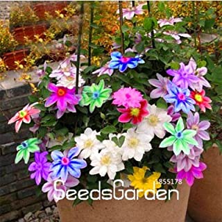 Best clematis bulbs for sale Reviews