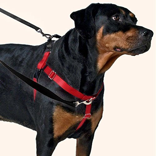 2 Hounds Design Freedom No-Pull Dog Harness Training Package with Leash, Medium (1' Wide), Black