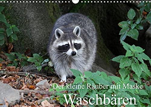 Der kleine Räuber mit Maske - Waschbären (Wandkalender 2022 DIN A3 quer)