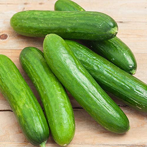 Spacemaster 80 Cucumber Seeds - 50 Count Seed Pack - Non-GMO - Produces Large Numbers of flavorful, Full-Sized Slicing Cucumbers Perfect for The Small Garden. - Country Creek LLC