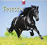 Friesen: Original Stürtz-Kalender 2020 - Mittelformat-Kalender 33 x 31 cm