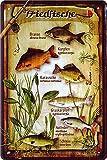 """Blechschild Spruch """"Friedfische, Brasse, Karpfe,"""