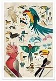 """Juniqe® Kinderzimmer & Kunst für Kinder Vögel Poster 20x30cm   Design """"Birds"""" entworfen von Dieter Braun"""