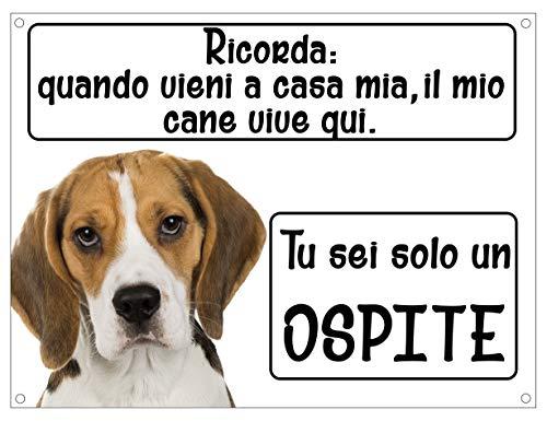 Beagle Recuerde mi perro vive aquí solo un invitado placa de metal Frase perro