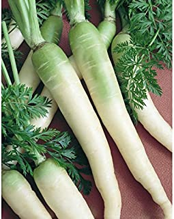 Snow White Carrot Seeds, 350+ Premium Heirloom Seeds, Gardeners Choice!, (Isla's Garden Seeds), Non GMO Organic, 85% Germination Rates Under Correct Conditions, Highest Quality Seeds, 100% Pure