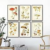 CloudShang Vintage Seta Botánico Poster Atlas de Comestible y Venenoso Hongos Plantas Poster Seta Pared Arte Impresiones Escuela Aula Oficina Pared Decoracion G06188