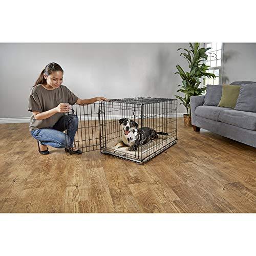 Petco Brand - You & Me 1-Door Folding Dog Crate, 36' L x 22.5' W x 24.9' H, Large