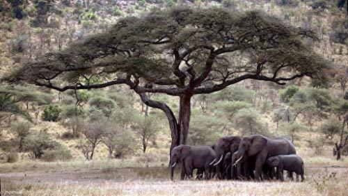DSJDSFH Diy Lienzo De Pintura Al Óleo, Pintura Digital Adecuada Para Niños Principiantes Adultos Decoración De La Pared Pintura Regalo De Vacaciones Único Elefante De 16X20 Pulgadas