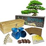 Bonsai Tree Starter Kit | Grow 4 Bonsai Trees | Beginner Friendly | Complete DIY Growing Kit | Indoor Growing Plant | Wooden Box | Perfect Gift Idea