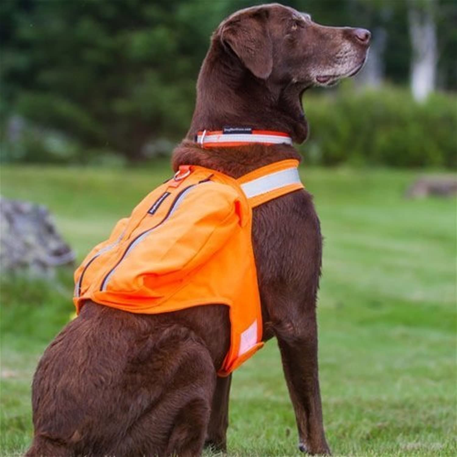 Dog Not Gone Visibility Products Safety Pack Vest, 32Inch by Dog Not Gone