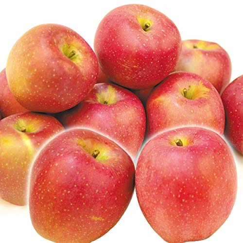 国華園 りんご 青森産 印度 5� 1箱 食品