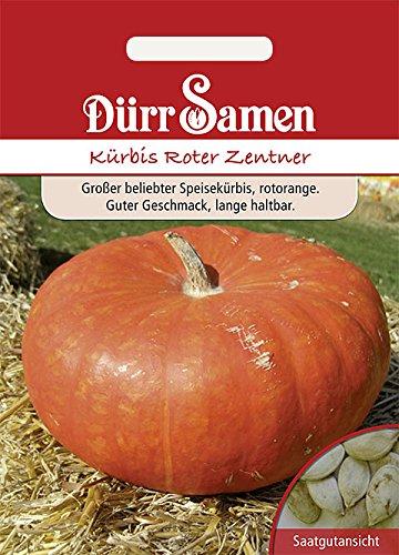 Kürbis Roter Zentner