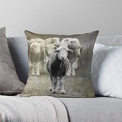 BONRI Herdwick Coniston District Sheep Herd Texture Lake - Fundas de Almohada Modernas Decorativas y Ligeras de poliéster Suave para Dormitorio/Sala de Estar/sofá, Silla y Coche 16×16inch