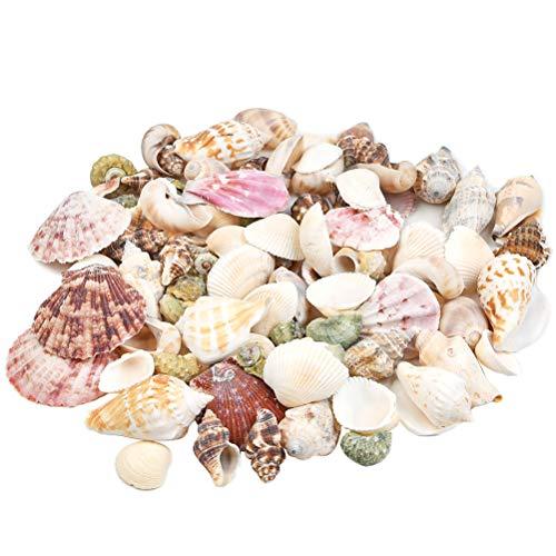 HONMIED Gemischt Dekomuscheln, Bastel Muscheln, Meeresschnecken, Muschel zum Dekorieren und Basteln, Ozean Muscheln und Schnecken für Vase Füllstoffe, Party, Hochzeit, DIY, Fisch Panzer