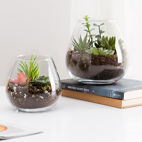 Round glass terrarium for display