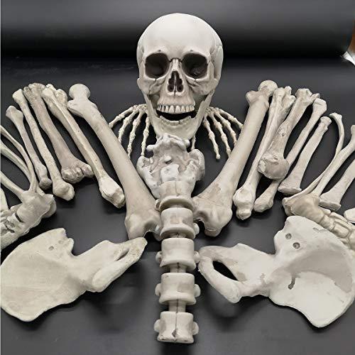 ExcLent 28 Stücke Halloween Streich Haunted House Beerdigung Lebensechte Skeleton Knochen Schädel Kopf Und Hände Friedhof Szene Cosplay Diy Scary Dekorationen Spielzeug