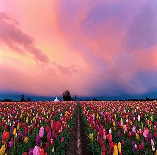 3D fotobehang NATURA HD foto Tulipani zonsondergang onder moderne wandafbeeldingen voor thuisdecoratie 250 * 175cm #001