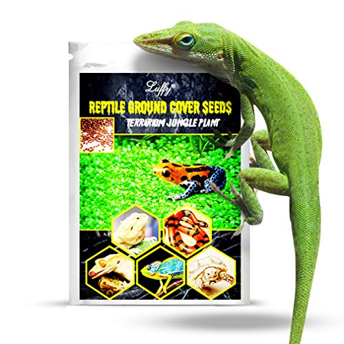SunGrow Reptile Glosso Seeds, 2 Ounce, Glossostigma Salatigasis Promotes Physical and Mental Health, Native Jungle Ambience, Vivarium Carpet Plant, Ideal for Beginners and Pros