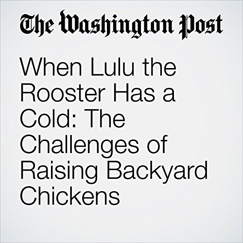 When Lulu the Rooster Has a Cold: The Challenges of Raising Backyard Chickens copertina