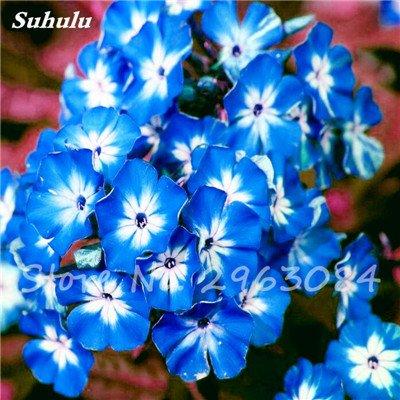 100 Pcs Nerium Oleander Flower Look Seed Tout comme les plantes Rose Fleur Bonsai jardin Arbre Quatre Saisons fleurs vivaces Easy Grow 3