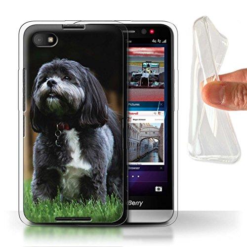 Handy Hülle kompatibel mit BlackBerry Z30 Beliebter H&/Eckzahn Rassen Shih Tzu Transparent Klar Ultra Sanft Flexibel Silikon Gel/TPU Hülle Cover
