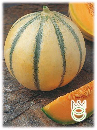 Cantaloupe Melone von Charentais Cucumis...