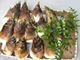 淡路島「裏山の朝どり天然筍(たけのこ)2.0kg」 収穫当日、クール便で農家から直送!