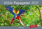 Kalender Wilde Papageien 2021 Din A3 Querformat: Papageien im Freiland - naturnah und authentisch