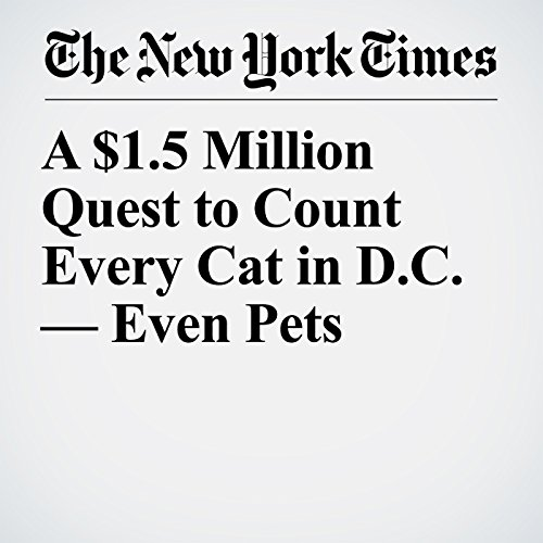 A $1.5 Million Quest to Count Every Cat in D.C. — Even Pets copertina