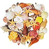 15種類混合海洋砂浜貝殻、ル巻き貝標本マリンライフヒトデ花瓶填料ビーチパーティー装飾、100個