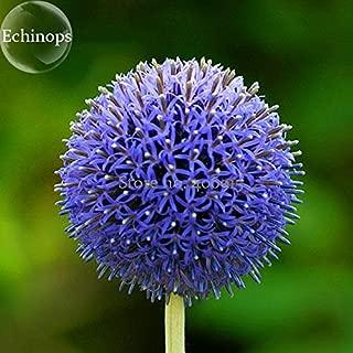 Visa Store 2018 Hot Sale Blue Globe Thistle Echinops Big Onion Flowers, 50 Seeds, Good-Looking Light up Garden Flowers E3708