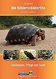 Die Köhlerschildkröte Chelonoidis carbonarius: Faszination, Pflege und Zucht