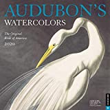 Audubon s Watercolors 2020 Wall Calendar: The Original Birds of America