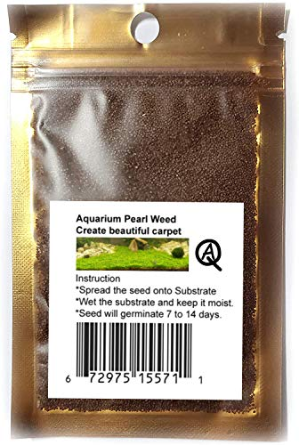 Fresh Water Aquarium Live Plants Foreground Seeds or Carpeting in Planted Fish...