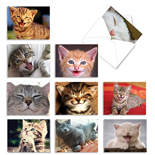 The Best Card Company - 10 All Occasion Blank Cat Cards (4 x 5.12 Inch) - Cute Assorted Bulk Card Set - Smitten Kittens M6485OCB