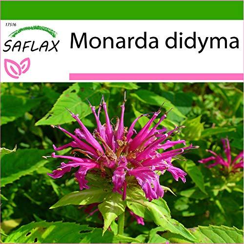 SAFLAX - Kräuter - Goldmelisse - 20 Samen - Mit keimfreiem Anzuchtsubstrat - Monarda didyma