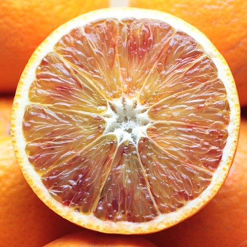 「訳ありタロッコ5」訳あり 愛媛産ブラッドオレンジ5kg(タロッコ) 希少品 入手困難 フルーツ 果物 通販