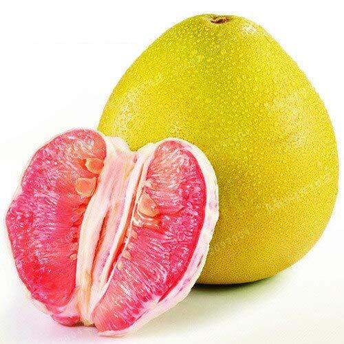 SANHOC 20Pcs Citrus Maxima Bonsai Rare Köstliche Pomelo Frucht Bonsai leicht anzubauen Für Home Garten Bepflanzung: 2