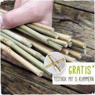 25 Bambusstäbe - Tonkinstäbe 105 cm lang/ 8-10 mm dick + Zubehör im Set