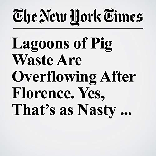 Lagoons of Pig Waste Are Overflowing After Florence. Yes, That's as Nasty as It Sounds. copertina
