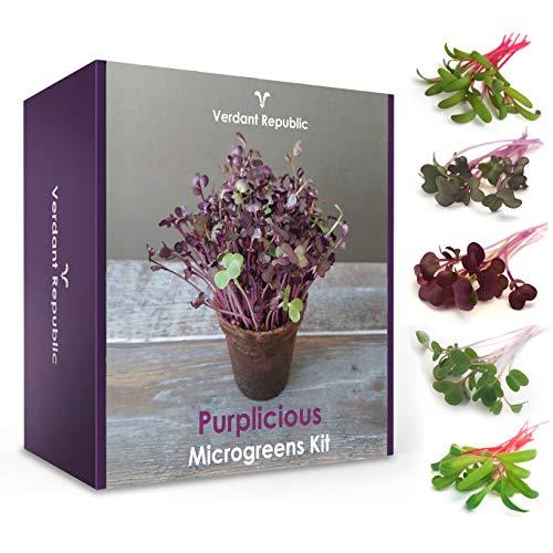 Pflanzen Sie Ihr eigenes SUPERFOOD – PURPLICIOUS Mikrogrün Set | Anzuchtset für Kräuter und Gemüsesprossen | Leicht zu züchtende | Ernte Keimlinge in 2 Wochen | Perfektes Garten Geschenk