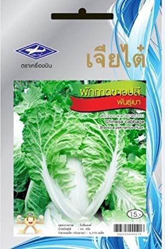Ferry 3 Packungen: 4270 Samen/Packung Thai Gemüse Chia Tai Chinakohl Pflanze Vitamin Gesundheit