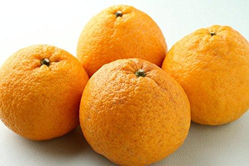 和歌山県産 爽やかな美味しさ 甘夏 (あまなつ) 3kg