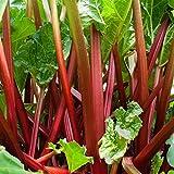 Creine 100 piezas de semillas de ruibarbo - Semillas perennes de huerta (50 Pcs)