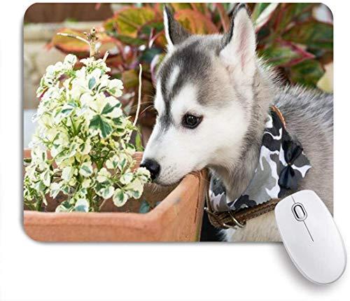 NANITHG Stoff Mousepad,Freund Siberian Husky Hund riechende Pflanze Wildes männliches Halsband Weise Tiere Wildlife Nature,Rutschfest eeignet für Büro und Gaming Maus