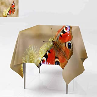 AFGG Square Table Cloth,Beautiful Butterfly Peacock on a branchk Eye (Inachis io),Table Cover for Dining,36x36 Inch