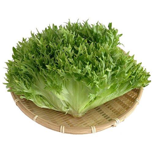 国産サラダ野菜 新鮮フリルレタス業務用 2kg 水耕栽培
