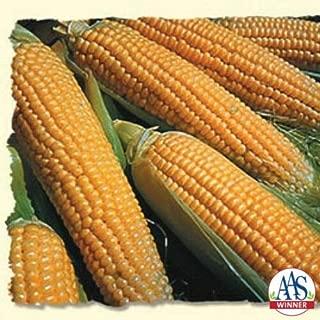 Iochief Hybrid Sweet Corn 150 Seed