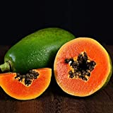 30 Piezas De Semillas De Papaya Excelente Decoración árboles Frutales Al Aire Libre Granja Lista Para Plantar Semillas De Cultivos Perennes Para Jardín Patio Patio